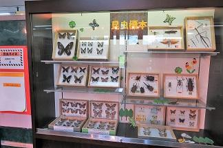 展示ケースに『昆虫標本』を紹介しています