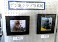 写真サークル「デジ亀クラブ」の写真ロビー展をしています